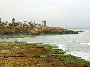 tidepools, beaches, ocean, morning
