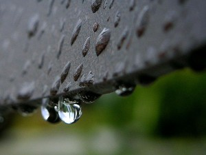 pioggia, rugiada, gocce