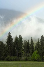 misty, rainbow, stretches, scenic, fores