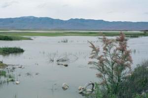 naturskjønne, bjørn, elv, vandrende, fugl, tilflukt, Utah