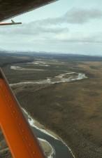 antenu, Arktik, Divljina, utočište