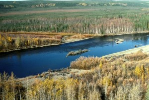 castor, rivière, paysage
