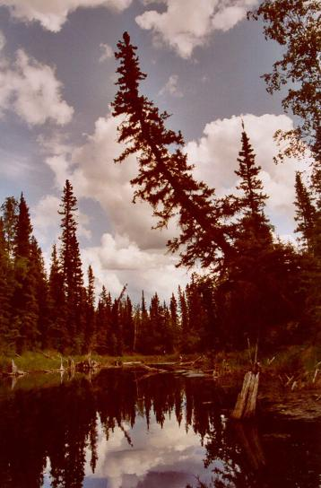 kanal, vodeći, oxbow, jezero, Yukon, Stanovi