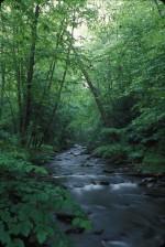 podvést, řeka, tekoucí, zalesněná, oblast