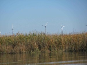 collinsville, Sacramento, river, wind, farm, background