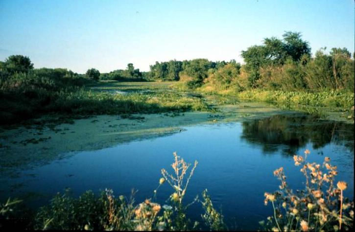 Detroit, floden, interwilderness, fristad