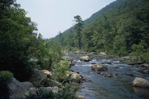 fast, mountain, river, flowing, conifer, forest