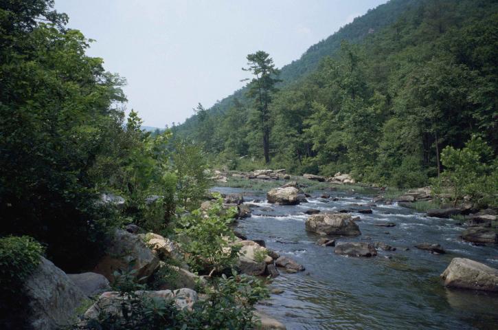 빨리, 산, 강, 흐르는, 침 엽 수, 숲
