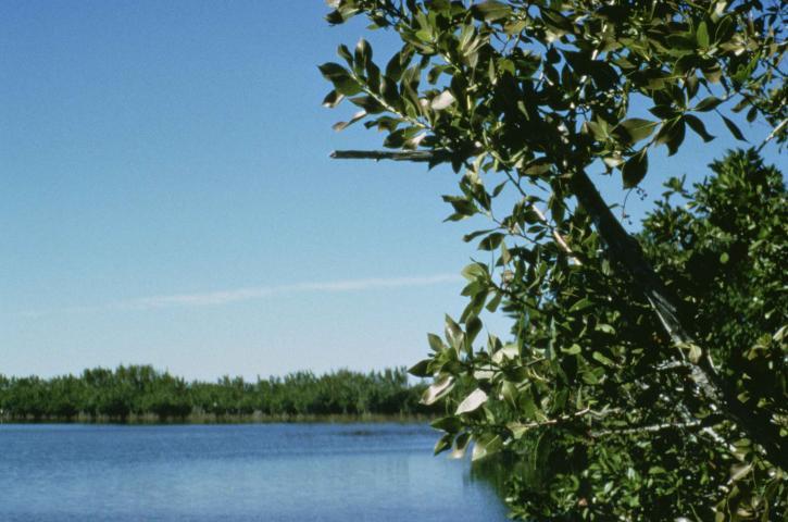 grön, grenar, förgrunden, floden, bakgrund