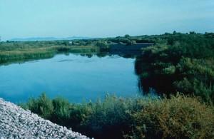 lower, Colorado, river, Cibola, wilderness, refuge