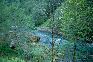 mountain, river, flowing, young, green, forest