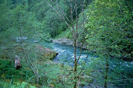 山、河川、若い、グリーン、フォレスト