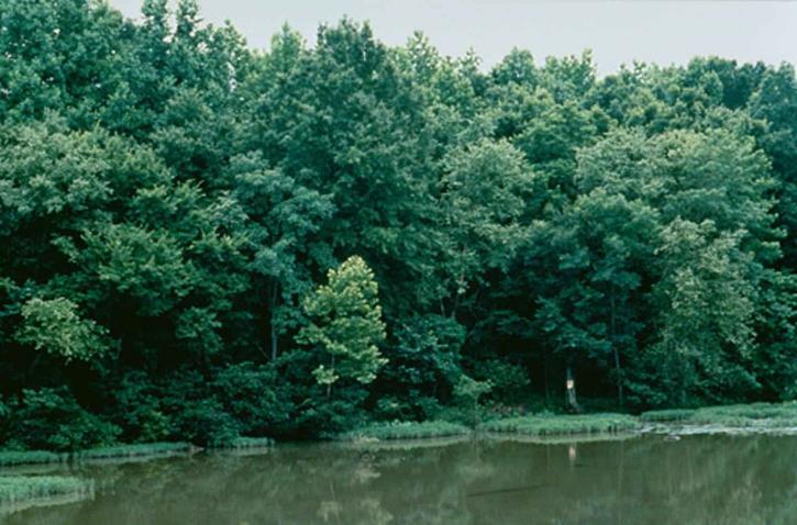 neuse, Râul, coasta