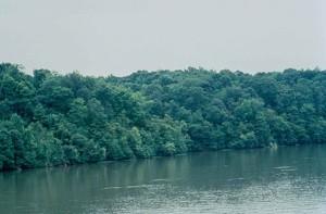 neuse, river, Carolina