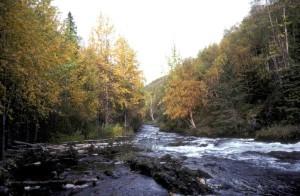 rapide, rivière