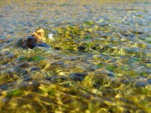sten, floden, pebble, flyder, vand