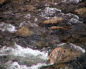 rapid river, stream water, rocks, nature