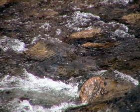 rivière rapide, l'eau des cours d'eau, les roches, la nature