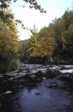 Râul, falls, vara