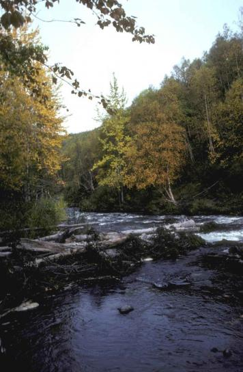 rivière, tombe, été