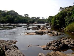 rivière, qui coule, okapi, faune, réserve, voisinage, Epulu, République démocratique du Congo