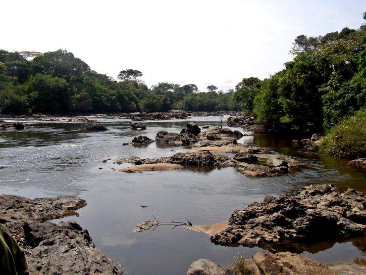 elva flyter okapi, fauna, reserve, nærhet, Epulu, den demokratiske republikken Kongo