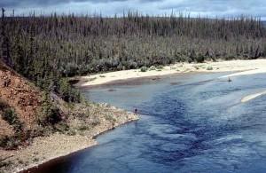 joki, metsä, kesä