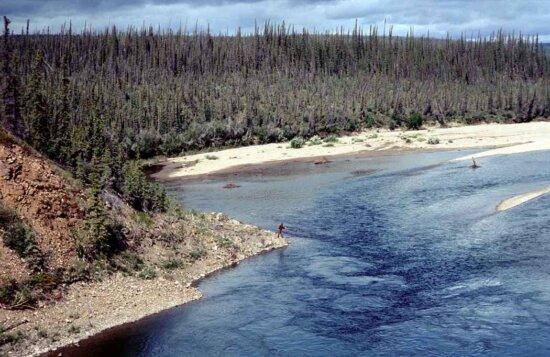 river, forest, summer