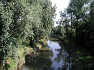 rivière, nature, habitat