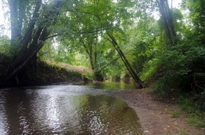 rivière, bois