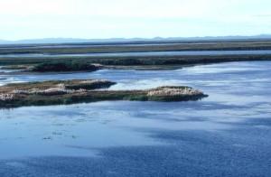 elven, våtmarker, bomull, gress