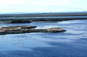 Sungai, lahan basah, kapas, rumput