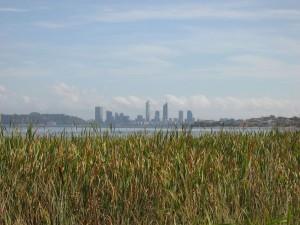 river, reeds