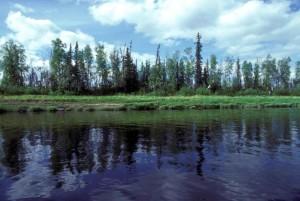 강, 스트림, 경관을, 자연