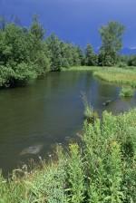 petite rivière, brosse