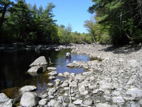surveying, mussels, drained, river