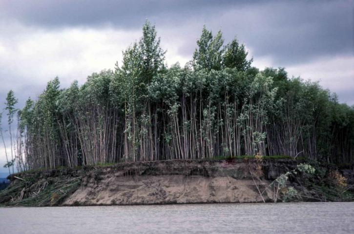 arbre, bosquet, érosion, banque, rivière