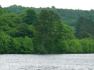 arbres, rivière