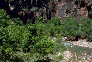 virgin, river, Zion, national park
