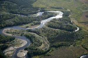 wild, forest, river, landscape