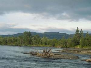 woody, debris, river