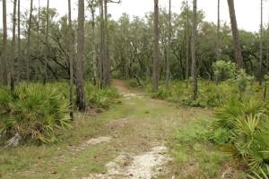 centenaria, rastro, bosque