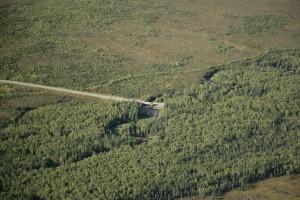 carretera, que pasa, árboles, cepillo, área