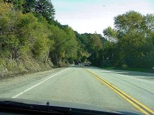 monterey, route, arbres