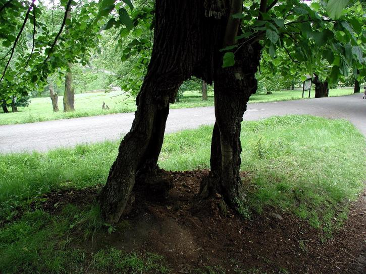 vieux, arbre, routes