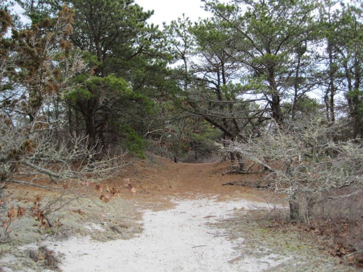 path, desert, forest