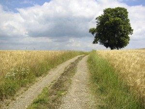 road, trought, agricultural, fields