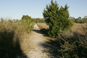 wild, trail