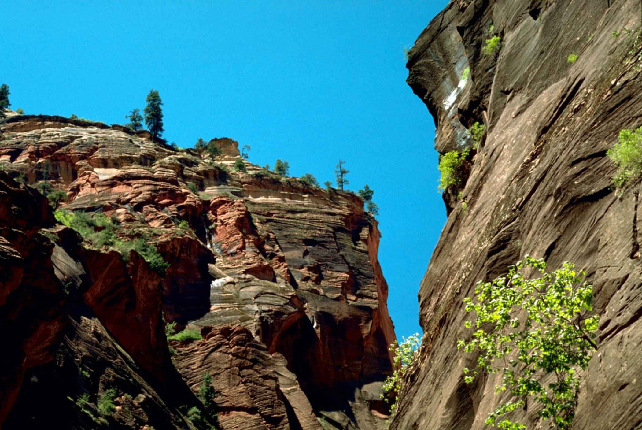 Free Picture Zion National Park Natural Rock Formations Landscape