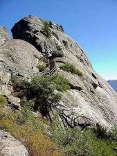 moro, roche, séquoia, parc